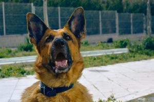 Abogados Greenberg & Stein Nueva York Heridas por mordeduras de perros